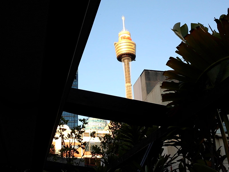 Showing the view of Sydney's centerpoint tower from Old Mates Place rooftop bar